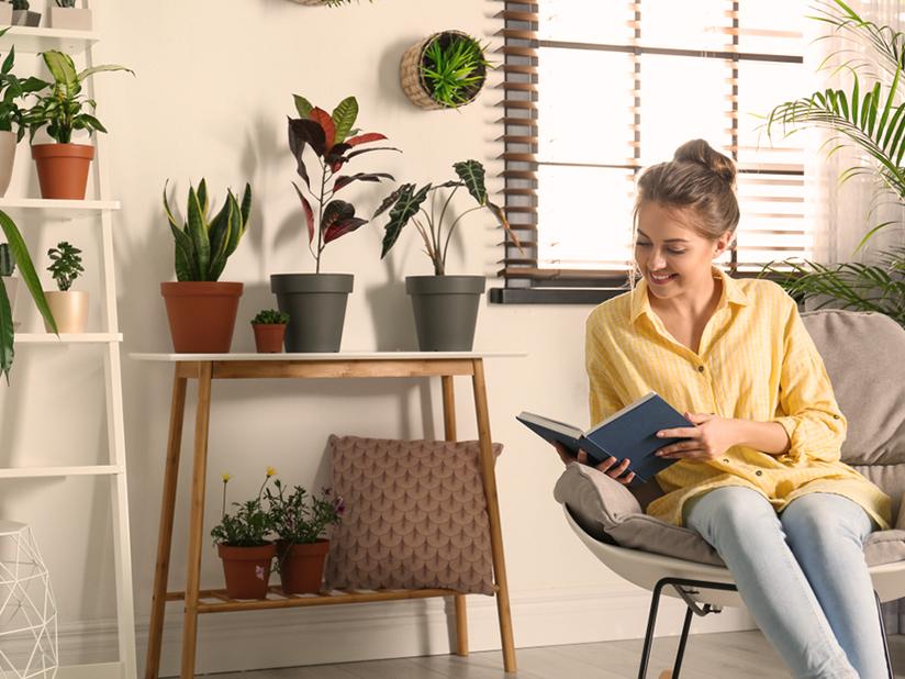 Tipp 1: Zimmerpflanzen reduzieren den Heizbedarf