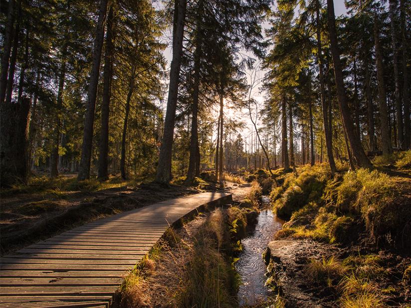 Gemächliches Wandern von Elend nach Schierke